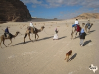 another group on camel in Sinai