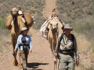 Letting your camel carry all the gear while you hike is a great way to enjoy our treks in the Big Bend region of West Texas.