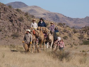 Wildlife and nature viewing, at a camel's pace, is unlike anything you've ever done before.
