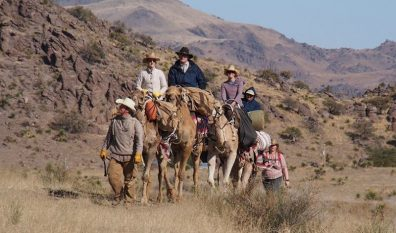 Big Bend Camel Treks