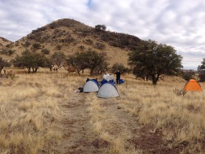 Your camels and you will share a beautiful camp site in the Davis Mountains of West Texas.