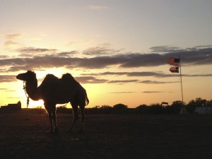7224-camel-sunset-flags